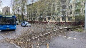 Moskova'da şiddetli fırtına ağaçları devirdi
