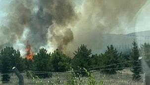 Atatürk Orman Çiftliği'nde yangın: 1 kişi gözaltında